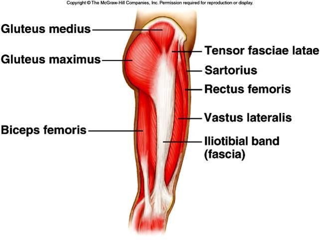 lateral leg