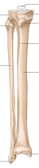 Tibia-fibula-no-labels