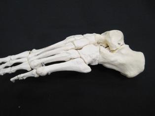 lateral-foot-bone