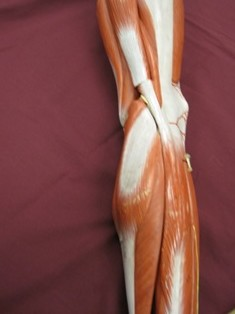lateral-knee-ITB-insertion