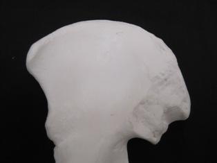 pelvis-bone-1725