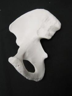 pelvis-lateral-obturator-1717